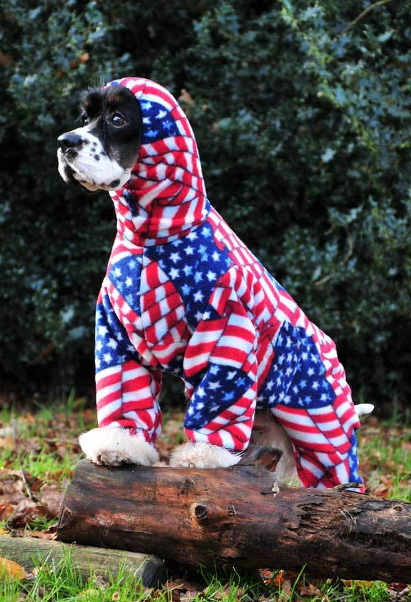 gallery14 - dogs in onesies