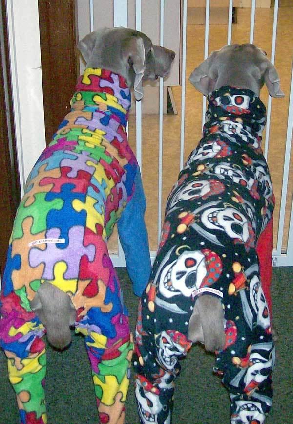 gallery21 - dogs in onesies