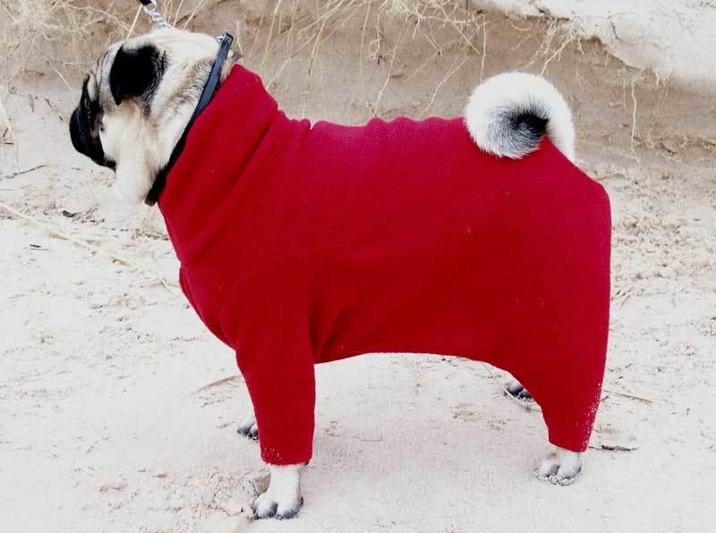 gallery24 - dogs in onesies