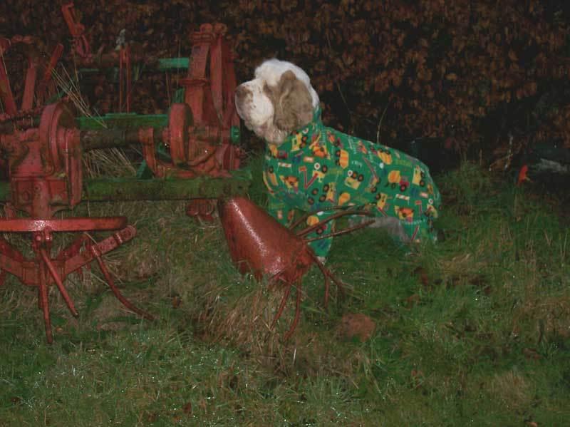 gallery9 - dogs in onesies
