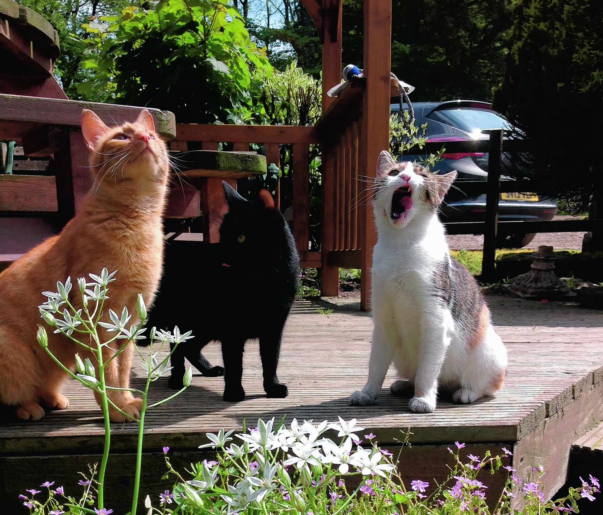 Wullie, Beanz and Mink have had a busy day gardening. They live at Craigievar with Zoe, Jimmy and Ali.