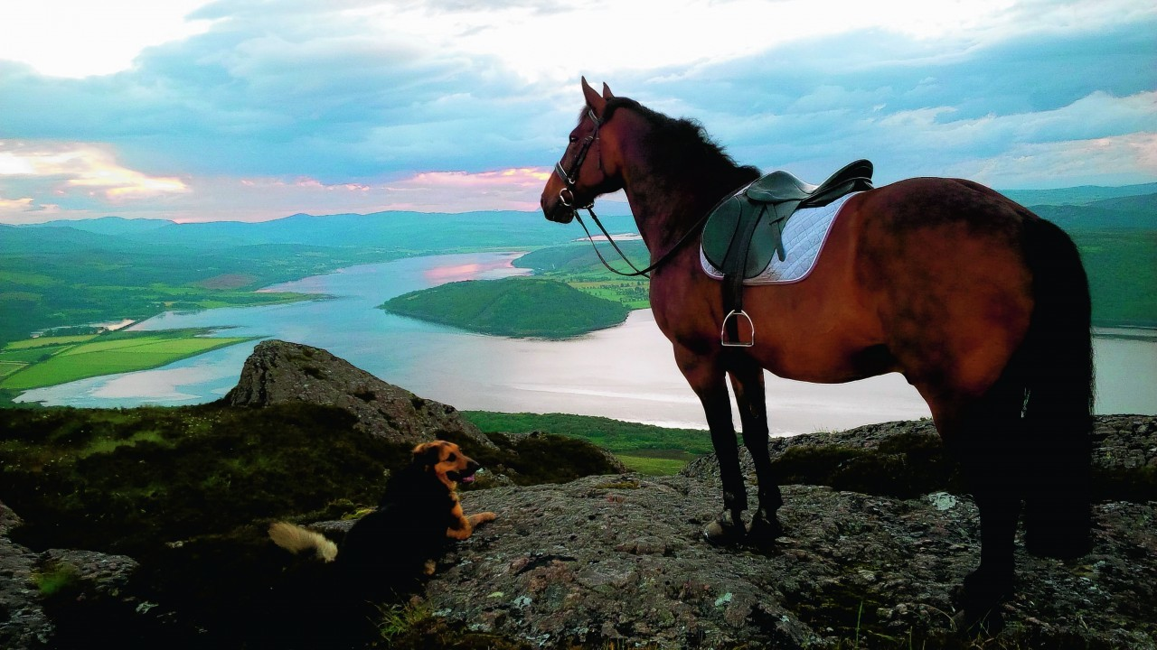Ed the horse and Coco a GSD x Lab enjoying the view from the top of the Struie. They live with Susan Ross, of Ardvannie, Edderton. They are our winners this week.