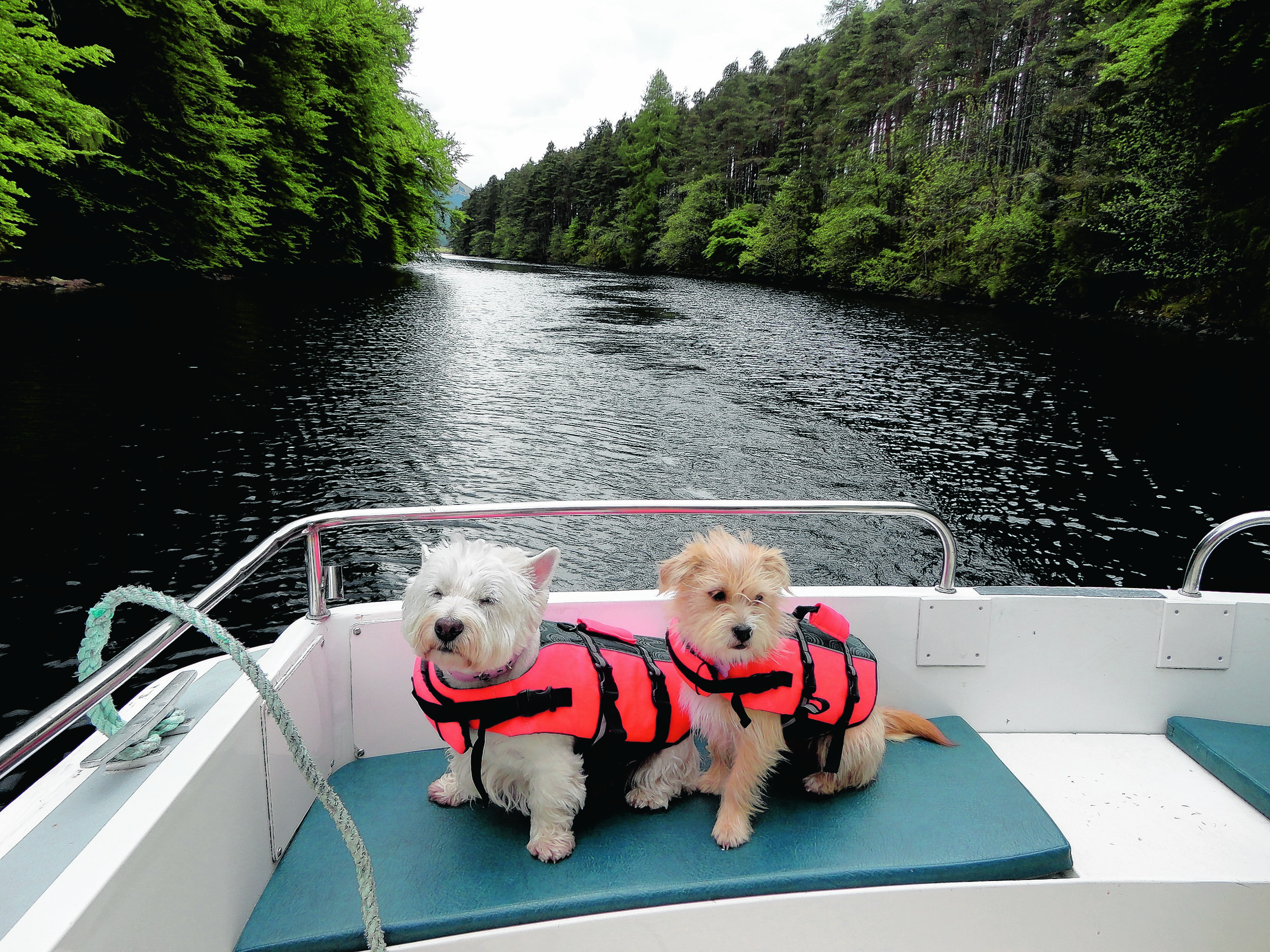Lucy the 12-year-old westie and Cally, an 18-month-old lhapso/jack cross, on holiday on the Caledonian Canal. This photograph was taken at Laggan Avenue en route to Fort Augustus. The pair live with Brian and Wendy Kerr in Forres. They are our winners this week.
