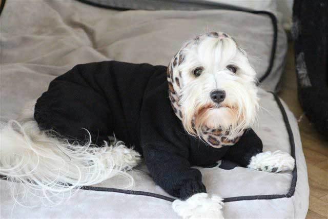 zarie - dogs in onesies