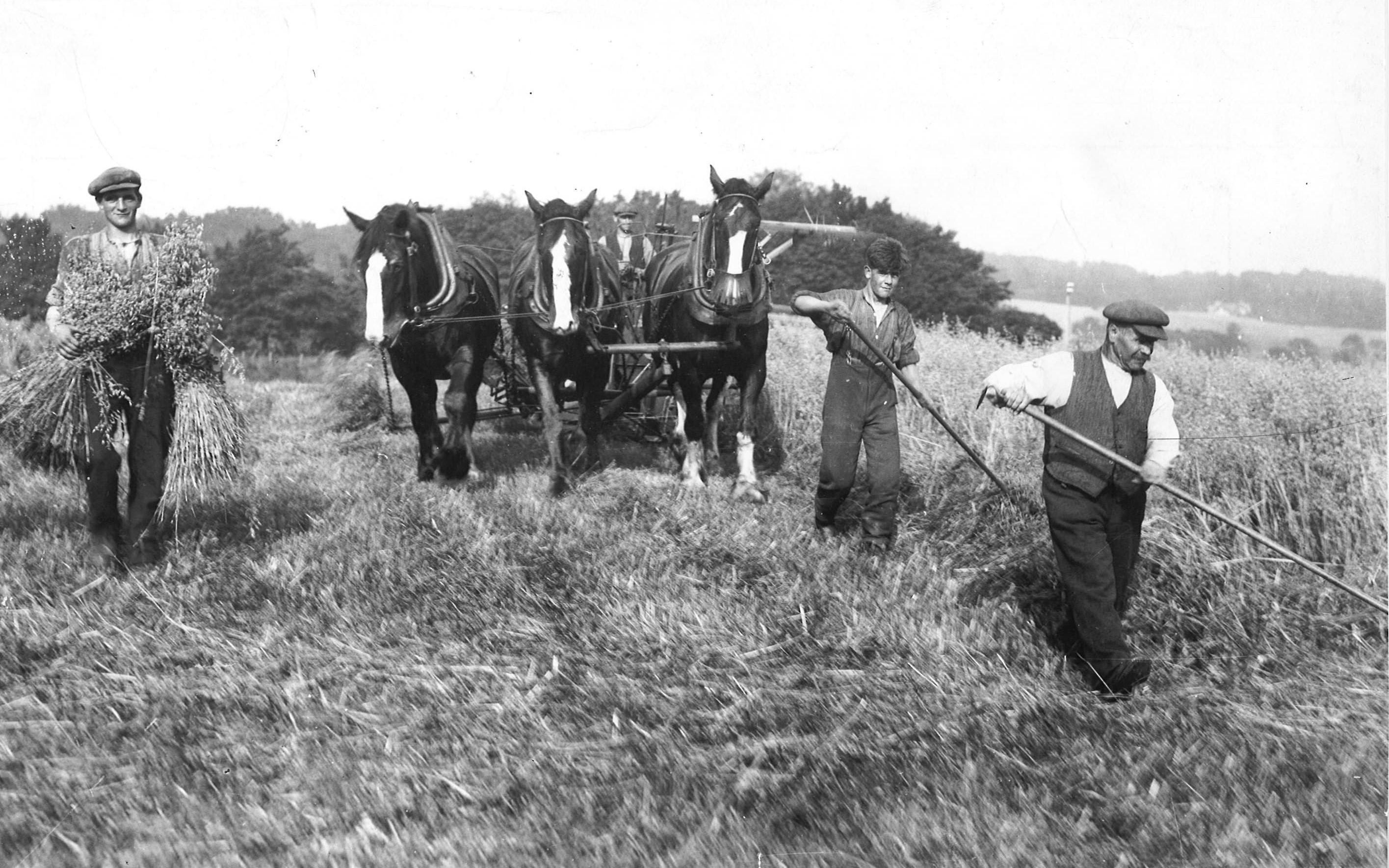 farming looking back
