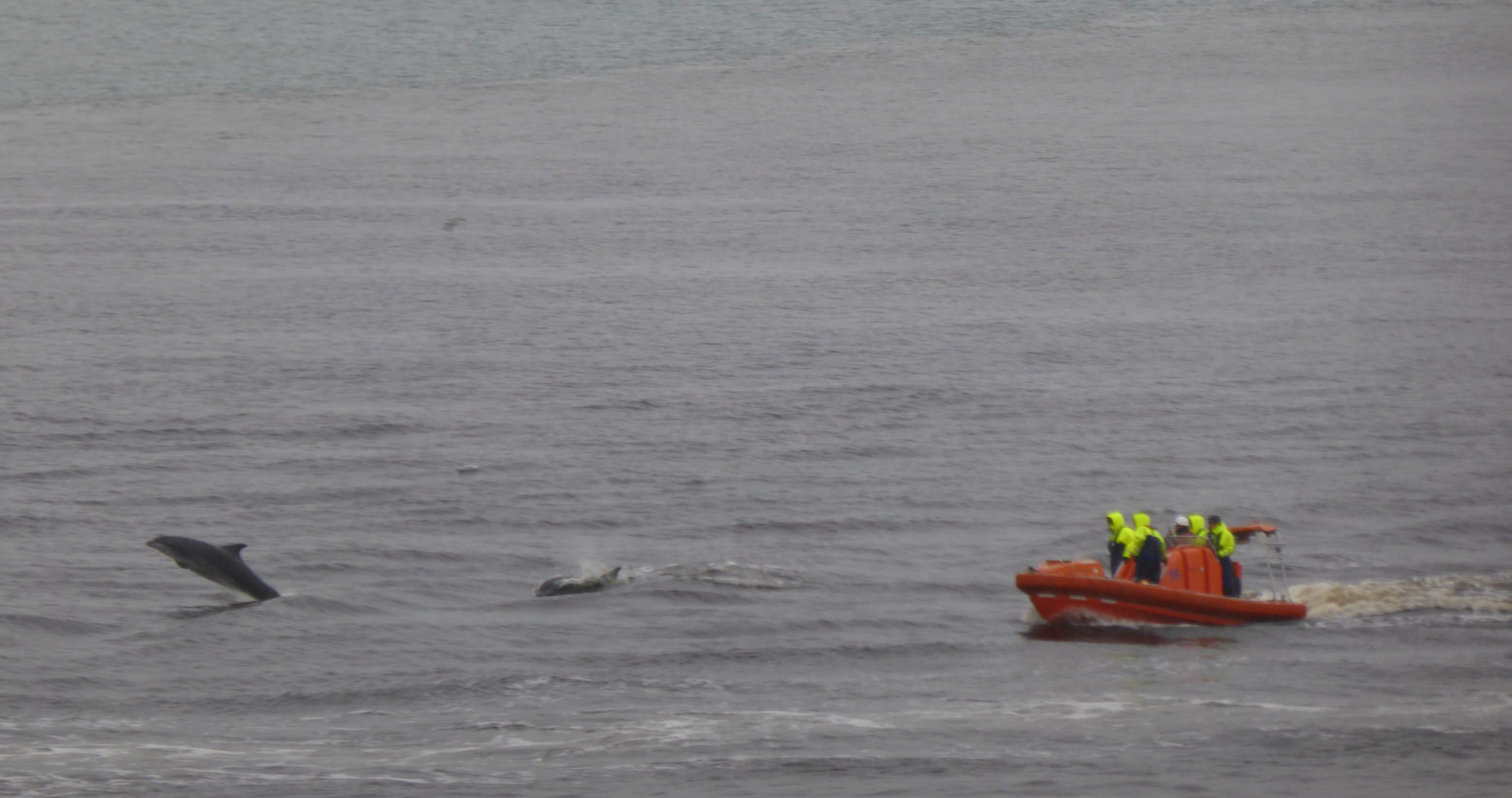 The dolphins swam alongside the lifeboat
