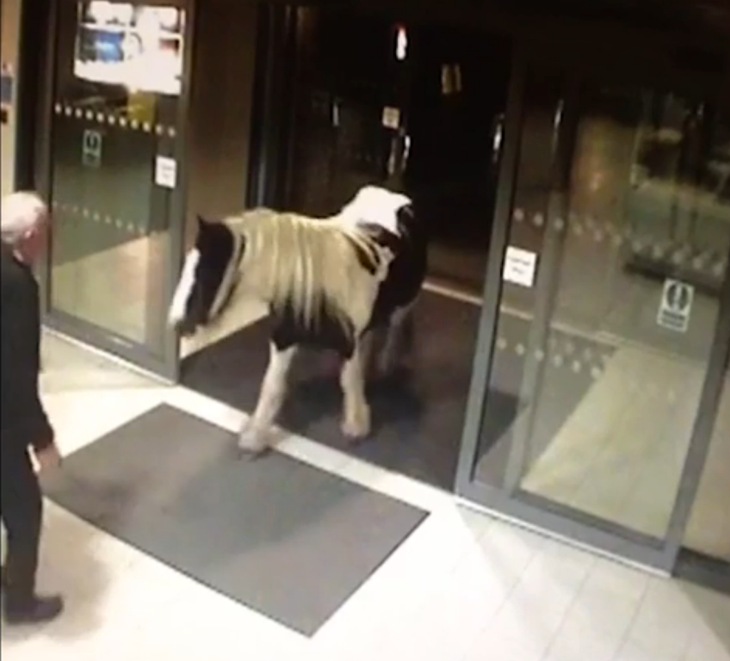 The horse walked straight through the front doors and into the station