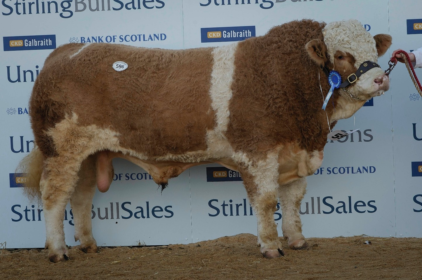 The top priced Simmental
