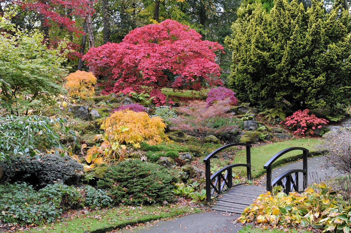 Aberdeen's parks and gardens bagged top prize at the Britain in Bloom