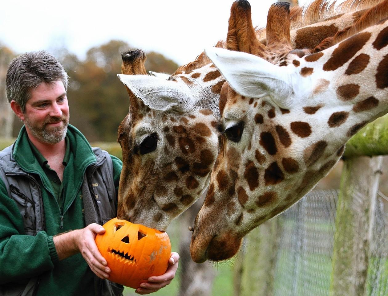animals-pumpkins-1.jpg