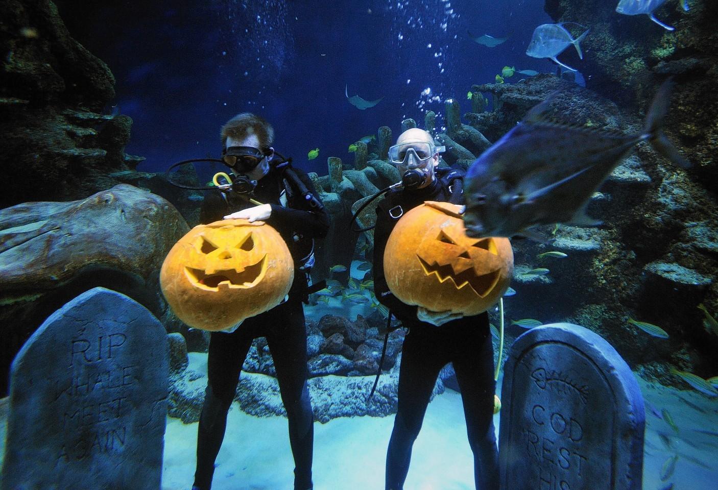 animals-pumpkins-10.jpg