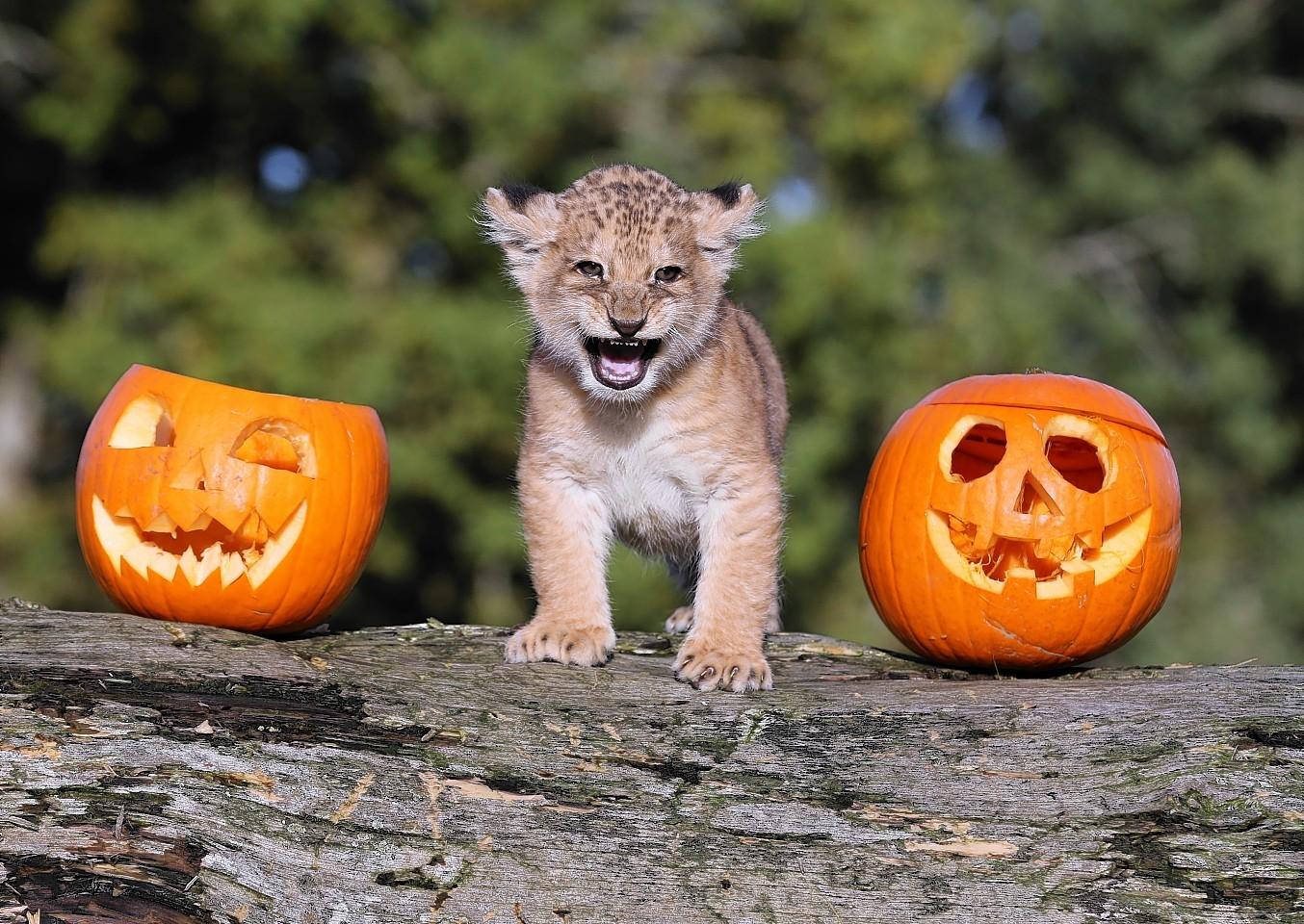 animals-pumpkins-14.jpg