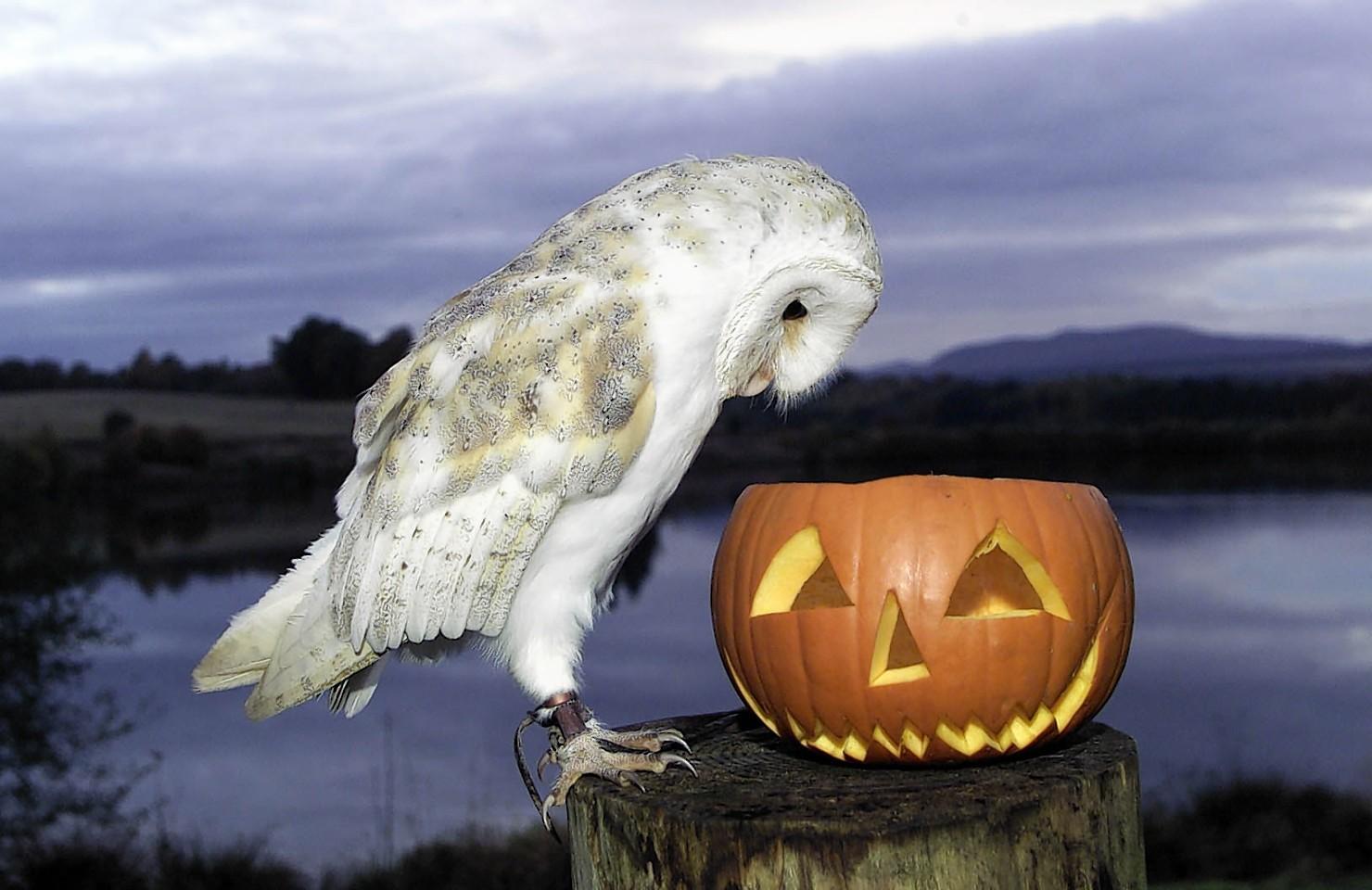 animals-pumpkins-4.jpg