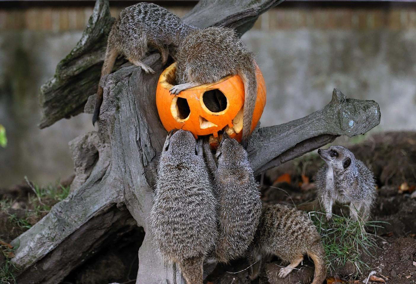 animals-pumpkins-5.jpg
