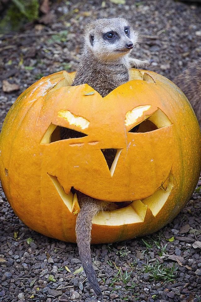 animals-pumpkins-6.jpg