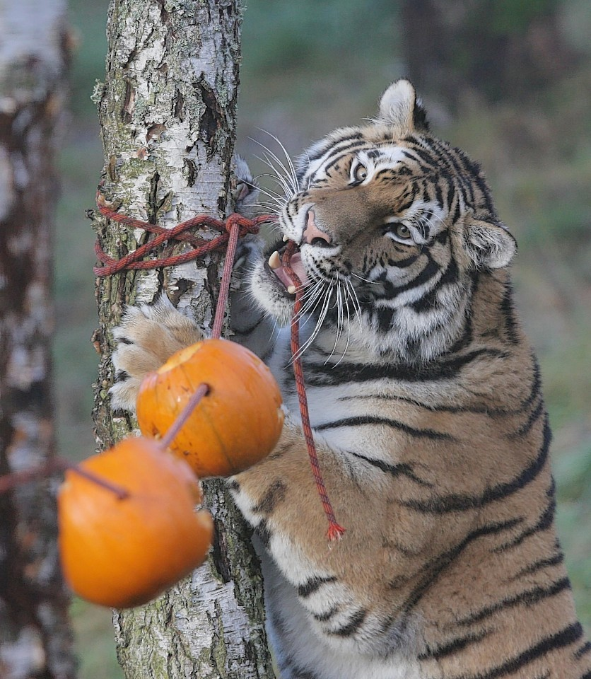 animals-pumpkins-7.jpg