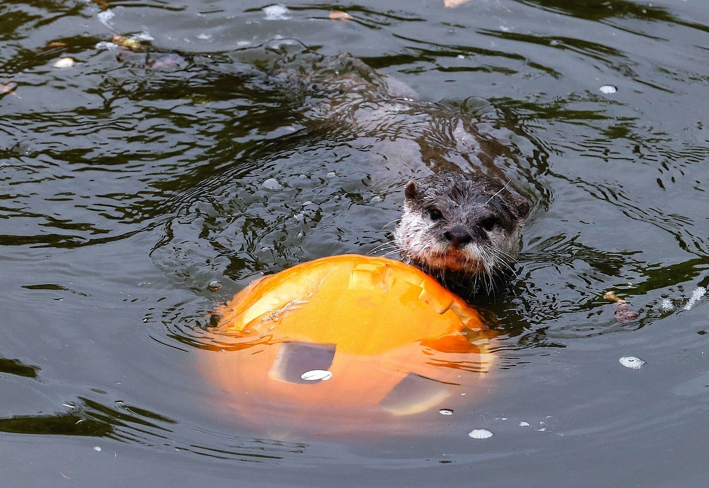 animals-pumpkins-8.jpg