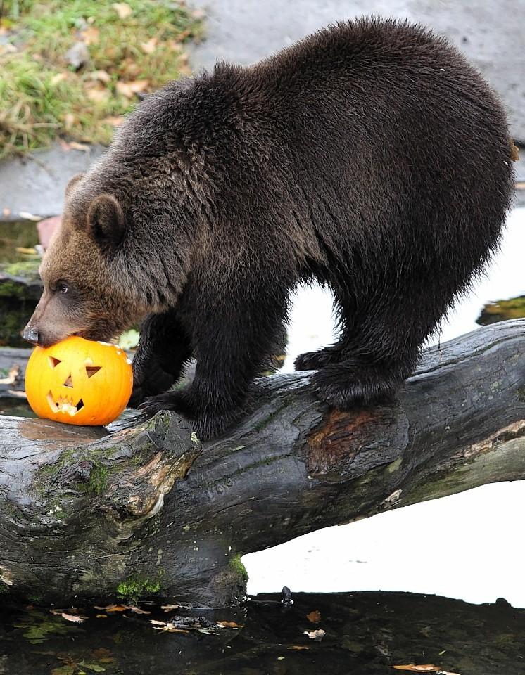 animals-pumpkins-9.jpg