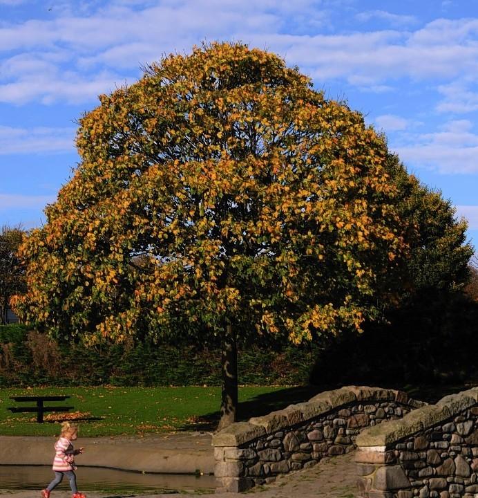 Victoria Park, Aberdeen