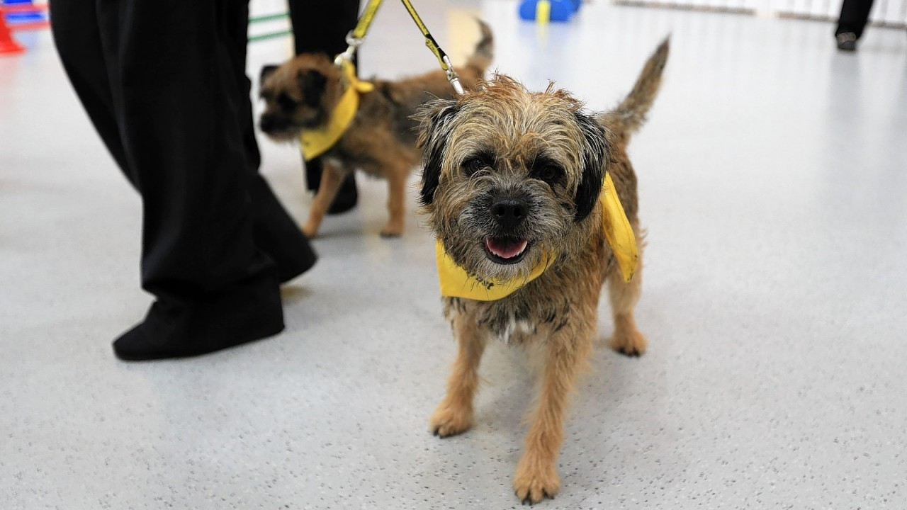 The official opening of The Dogs Trust in Manchester.