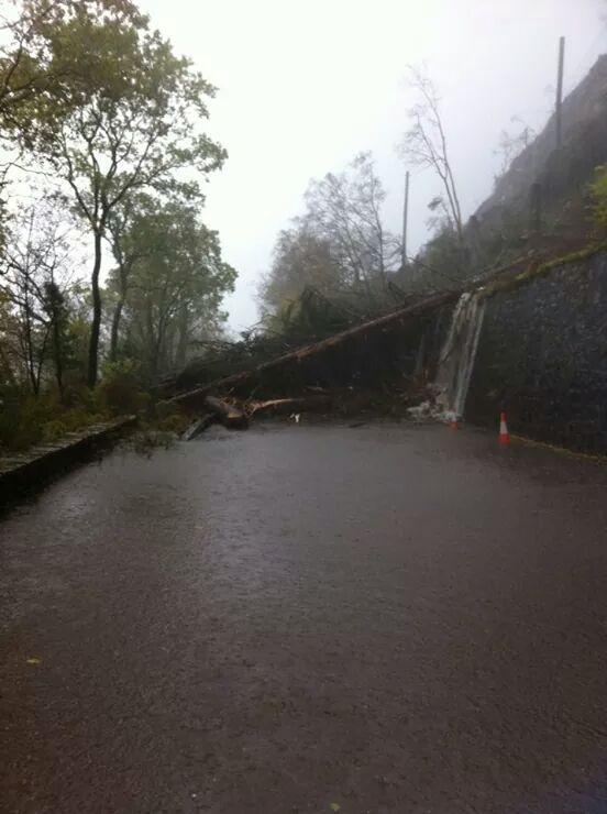 Trees blocking the A82 near the Corran Ferry