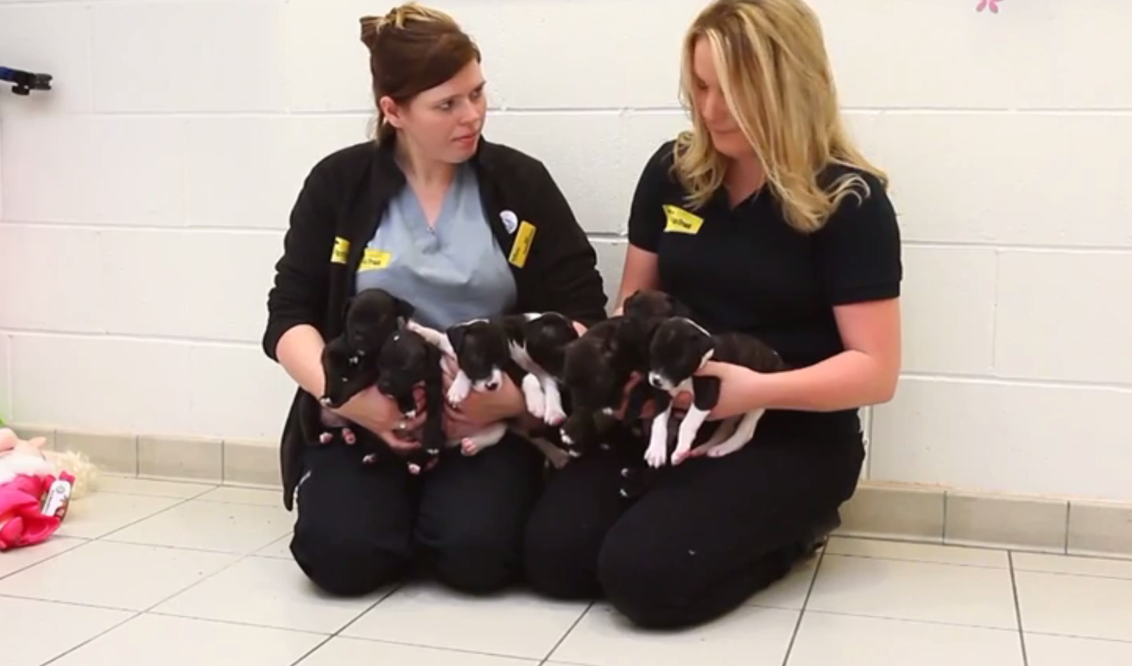 The puppies' mother died during labour
