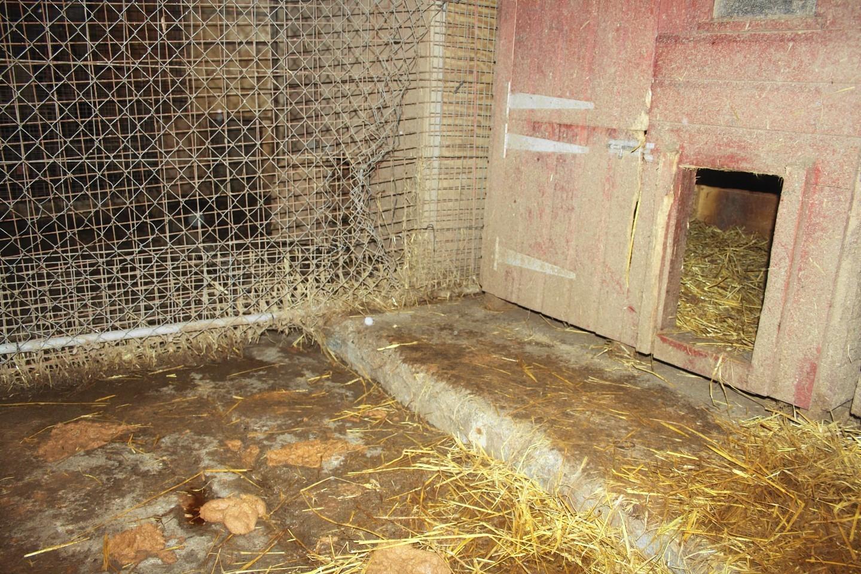 puppy-farm-3.jpg