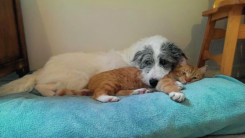 Nettle and Rambo having cuddles at their home in Clatt, Huntly, where they live with Erica Cooke.
