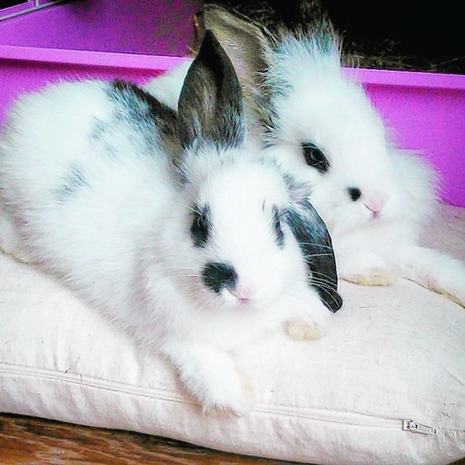 Oreo and Boo are looked after by Jeffrey and Kimberley in Buckie.