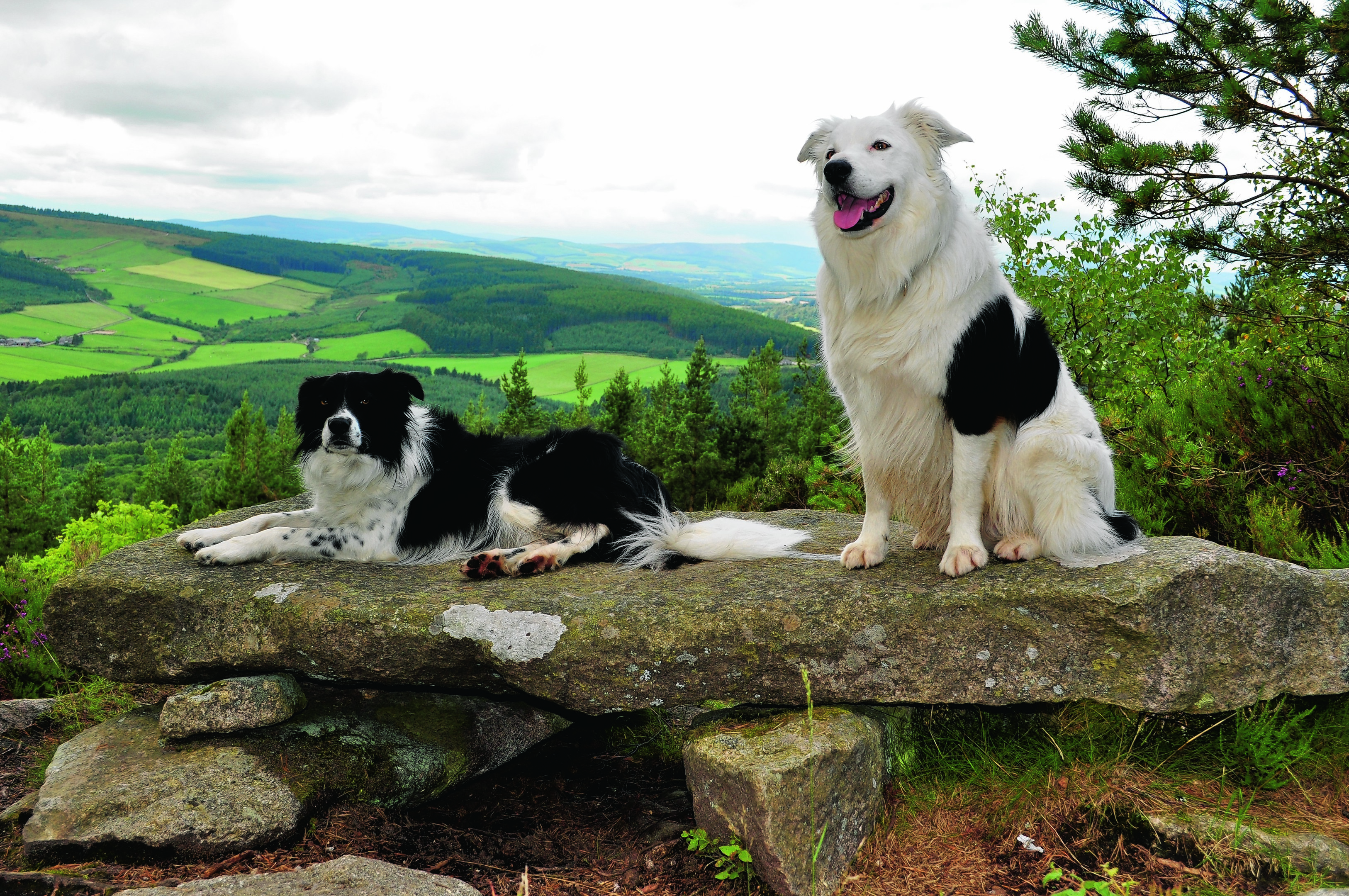 Soup and Paddy on Millstone Hill, Bennachie. They live with Mick and Donna Taylor at Gartly, Huntly.