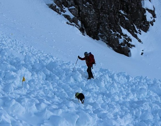 Tara and her handler, Tom Gilchrist, searching the debris from a large avalanche on Ben Nevis last year.