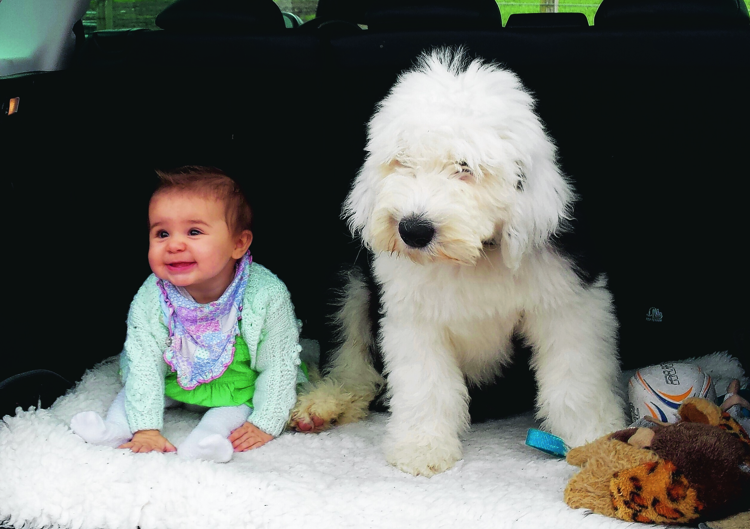 This is a picture of Dougal, a four month old old English sheep dog guarding seven month old Jessica. The pair live with Dawn Cowie-Mcinnes in Nairn and are our winners this week.