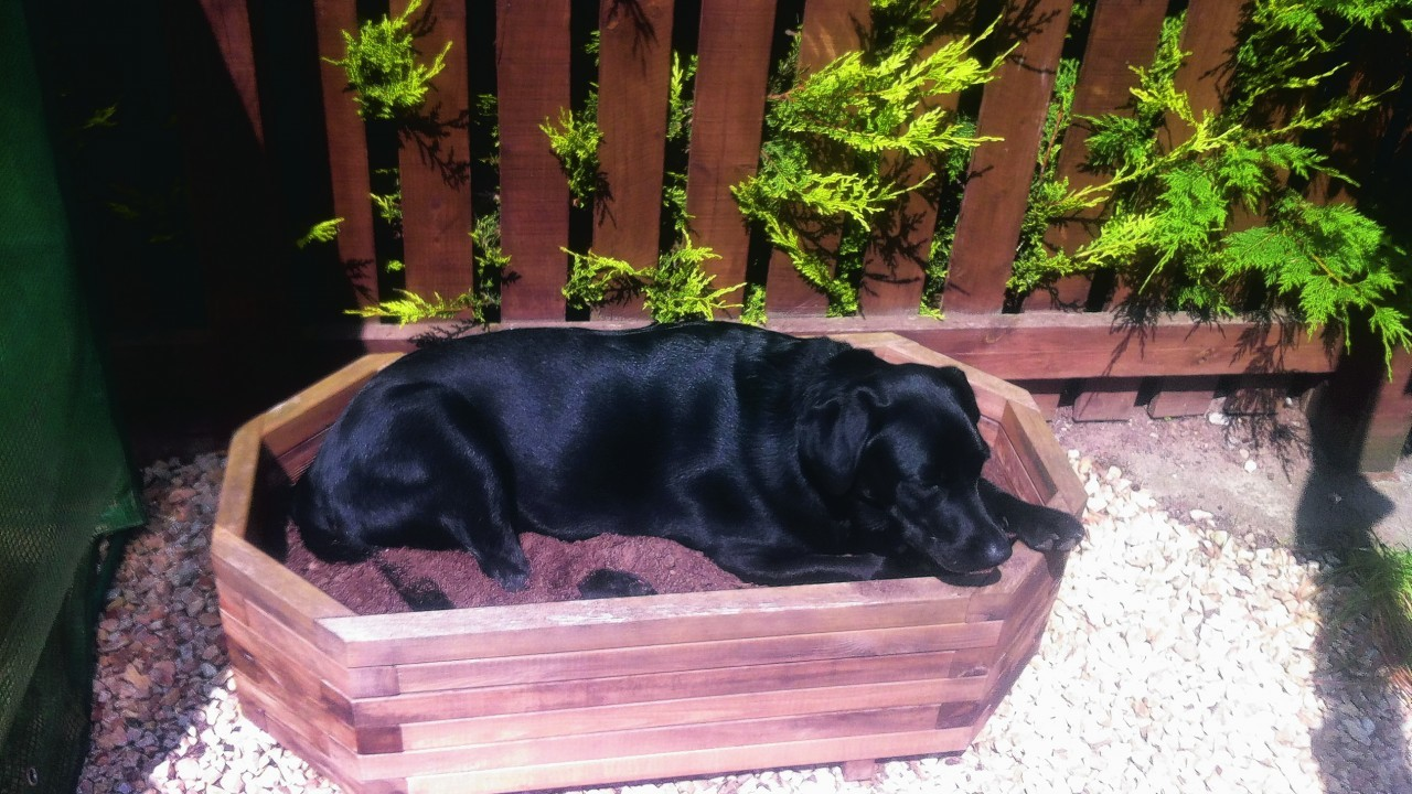 Misty is a two year old black Labrador who belongs to Morag Ritchie, of Forres.