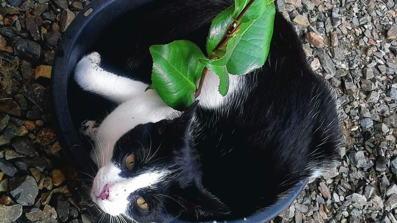 Oreo the cat lives with Leanne Shand in Inverkeithny, Huntly.
