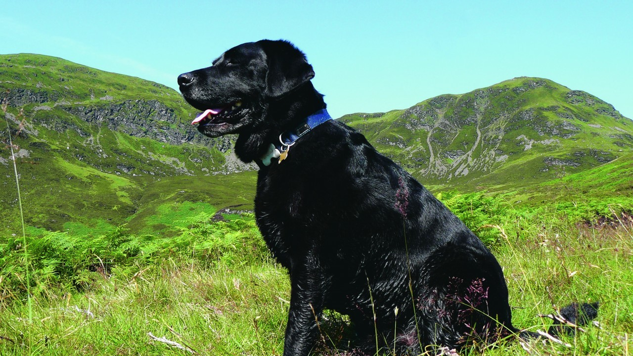 Jura lives with the Russell family in Insch and is pictured here on holiday in Perthshire.