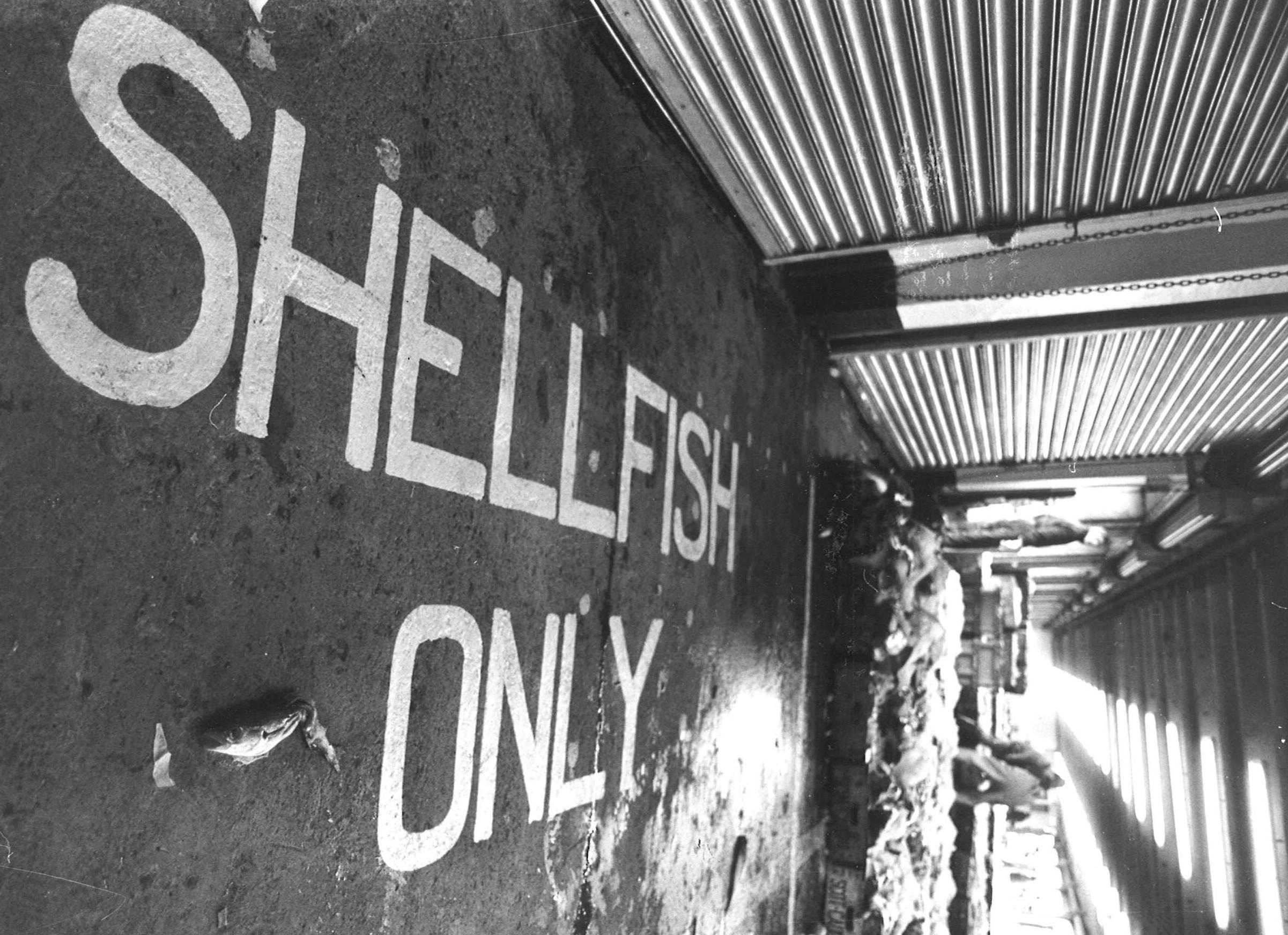 peterhead fish market 10