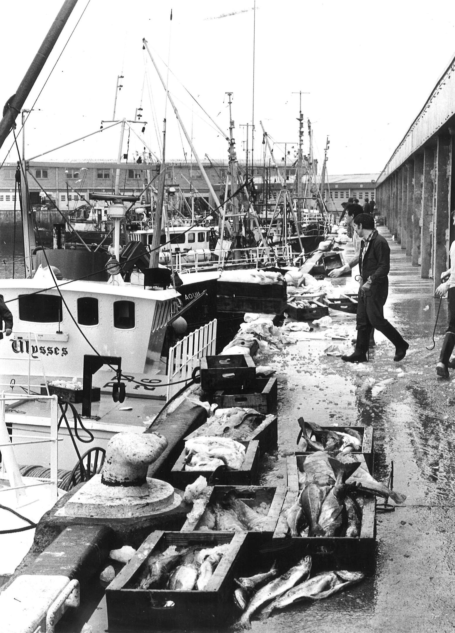 peterhead fishmarket 5