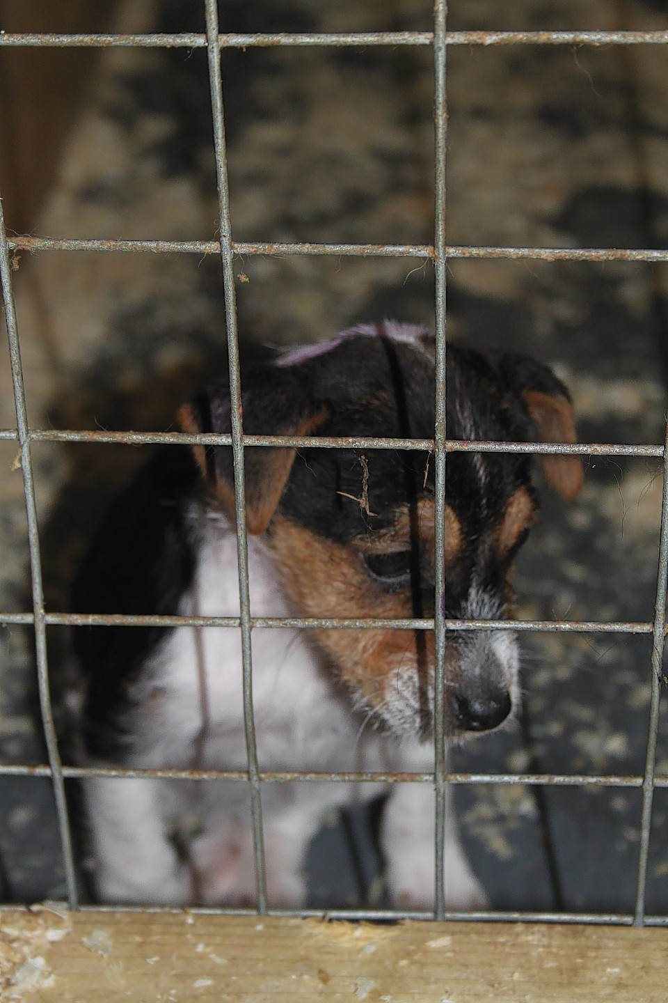 Animals bred in puppy farms are often kept in terrible conditions.