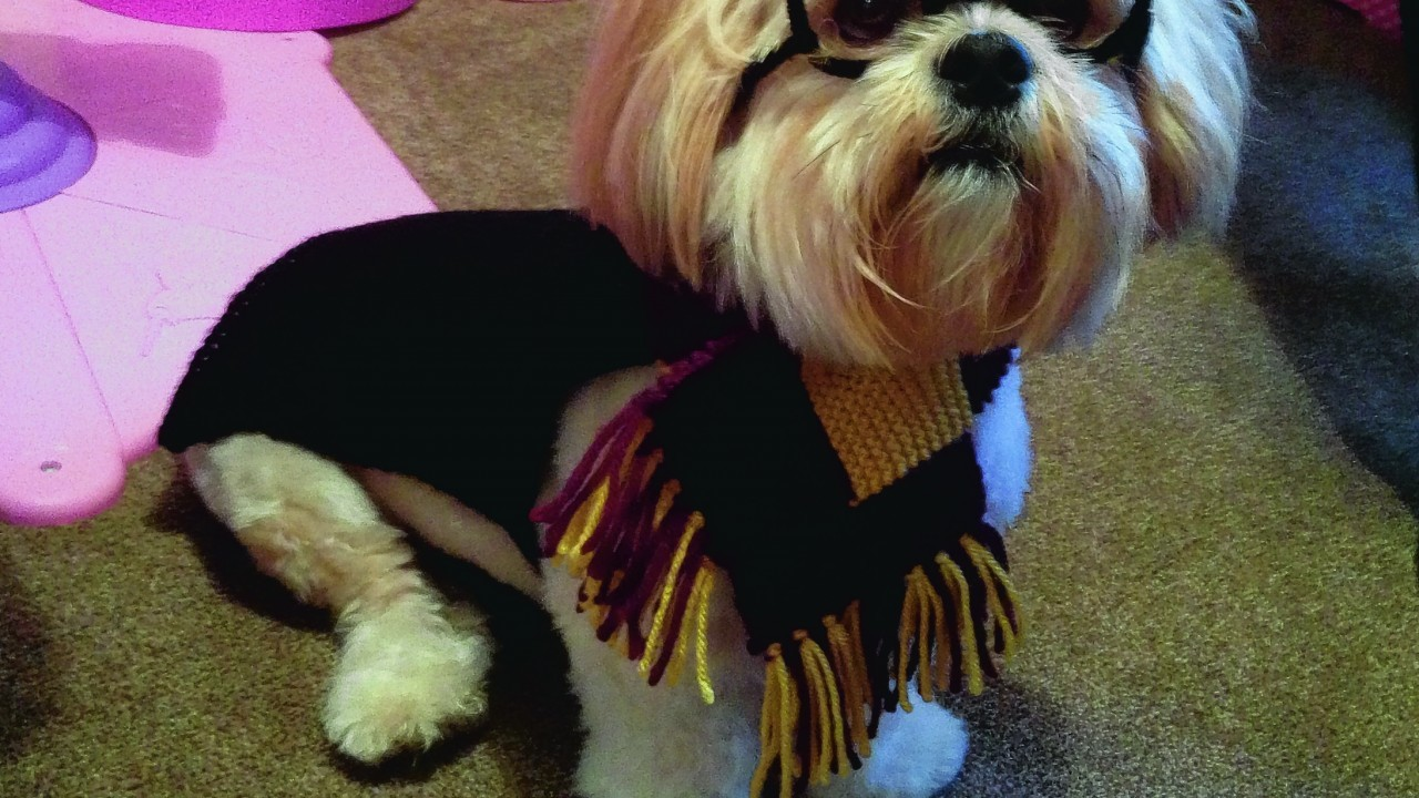 This is Alfie the Lhasa apso all dressed up for Halloween as Harry Potter. He lives with Steph Ritchie in Bishopmill, Elgin.