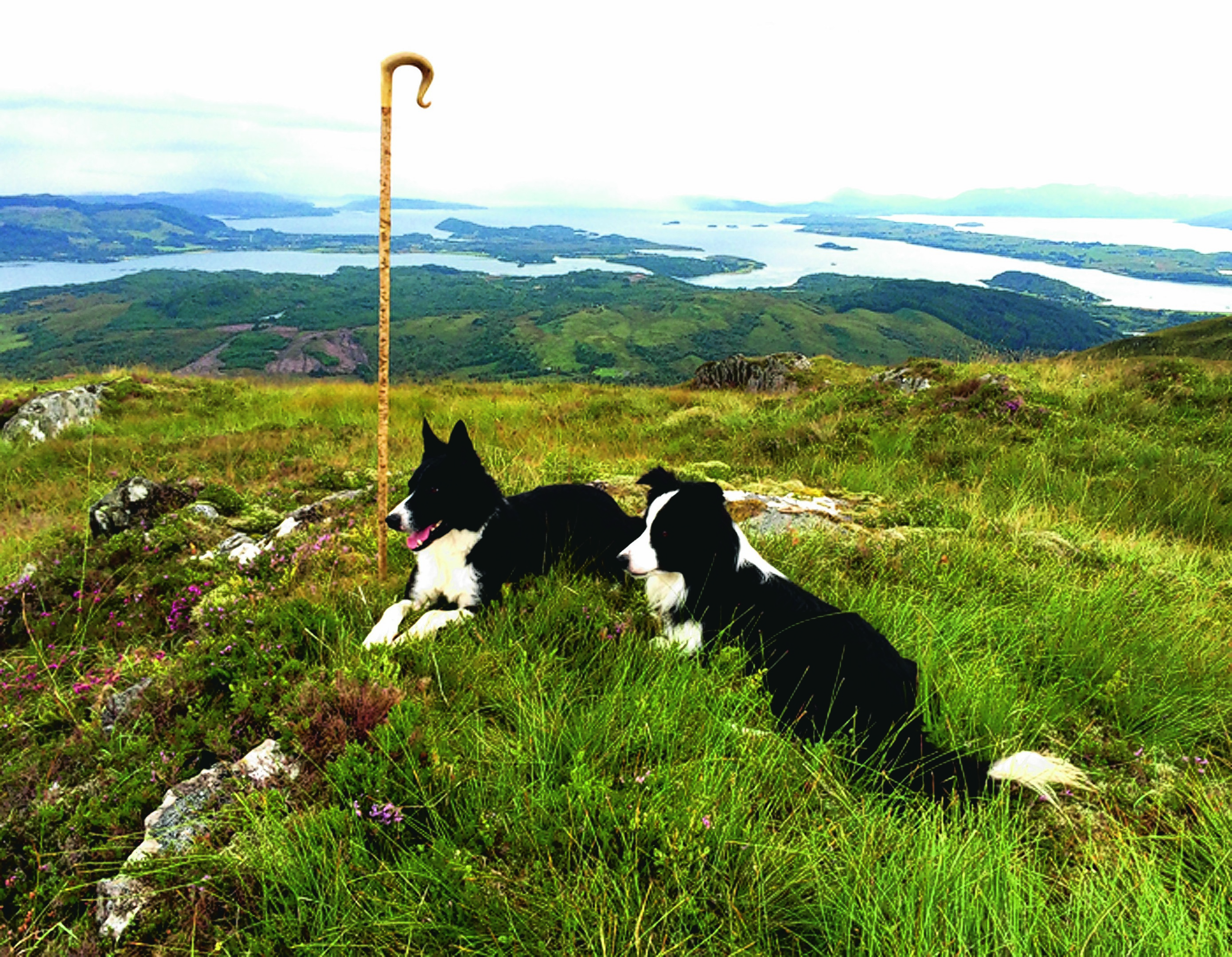 Min and Chance out on the hill in Appin, Argyll. They live with Sandra Maccorquodale.