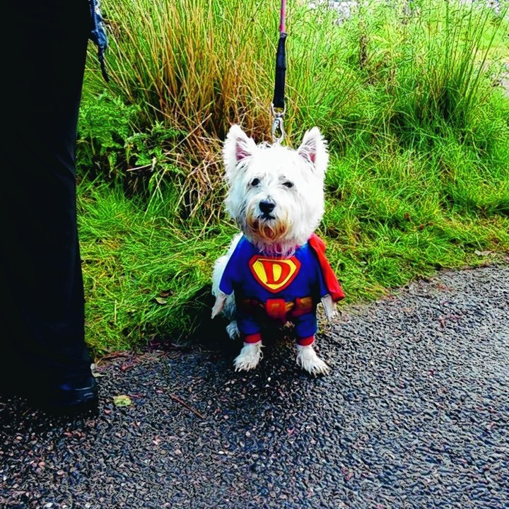 Haggis the Westie from Ellon at the finish of her charity walk round Loch Muick in aid of the MND association with her owners Alison and Gavin Davanna.