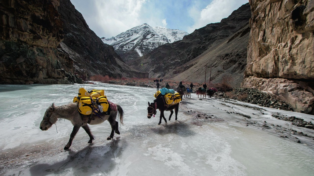 donkeys carry luggage across a frozen river at Hemis