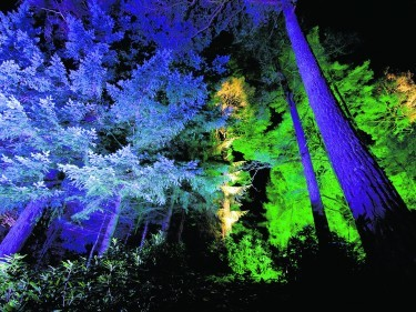 Enchanted Forest 2007