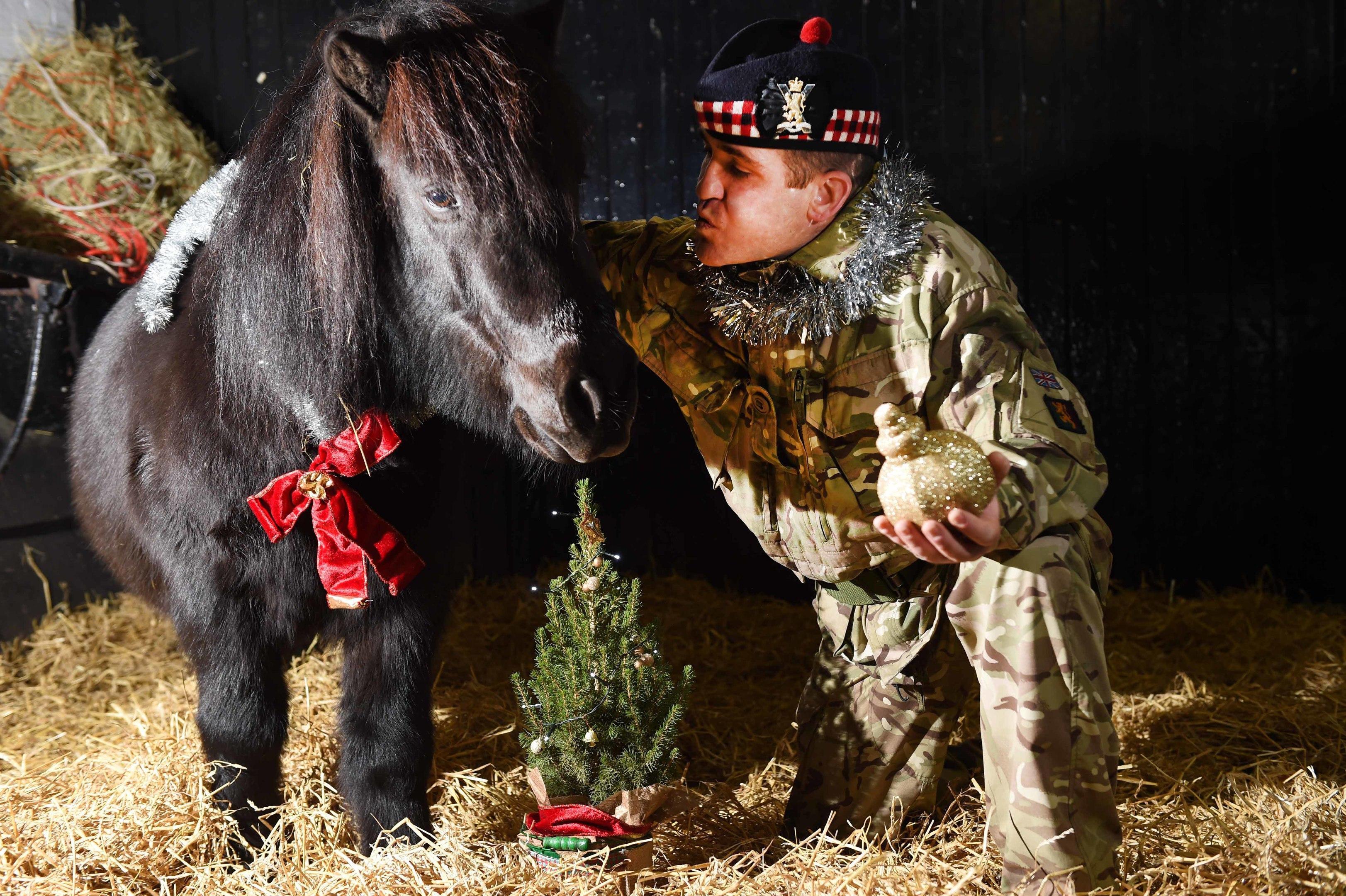 Private Colin Fotheringham and Cruachan IV enjoying the festive season in the pony at Redford Barracks, Edinburgh.