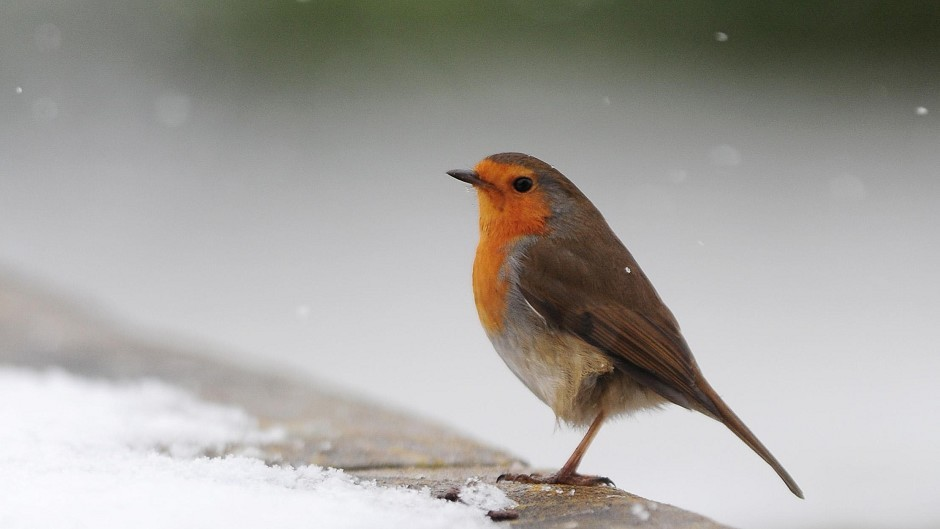 Snow is on its way for the north-east