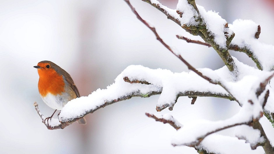 A weather warning for snow is in place on Christmas Eve