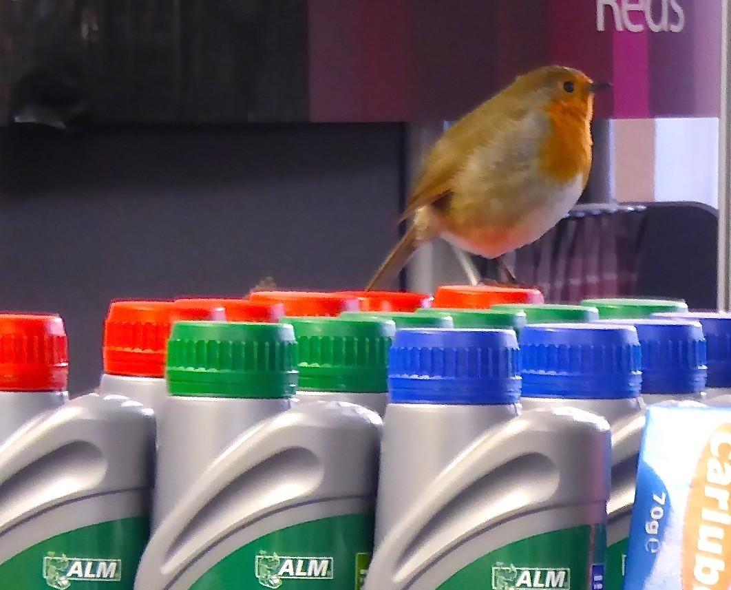 The Robin makes himself at home