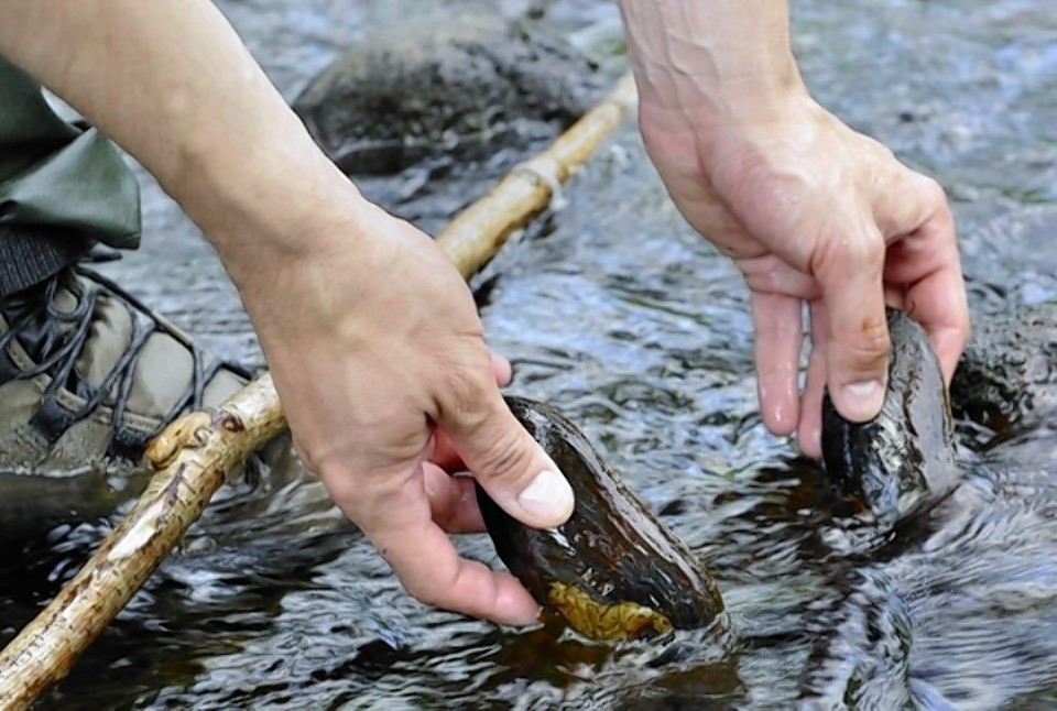 Work has started to protect endangered freshwater mussels in the River Spey.