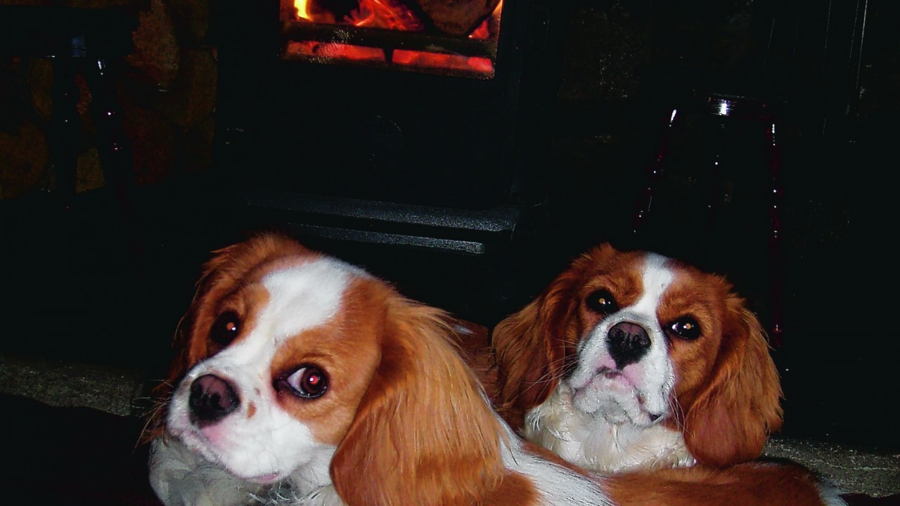 Here are Cassie and Lucy enjoying a rest beside the fire. They live with Christina Mathieson at Cromdale, near Grantown.