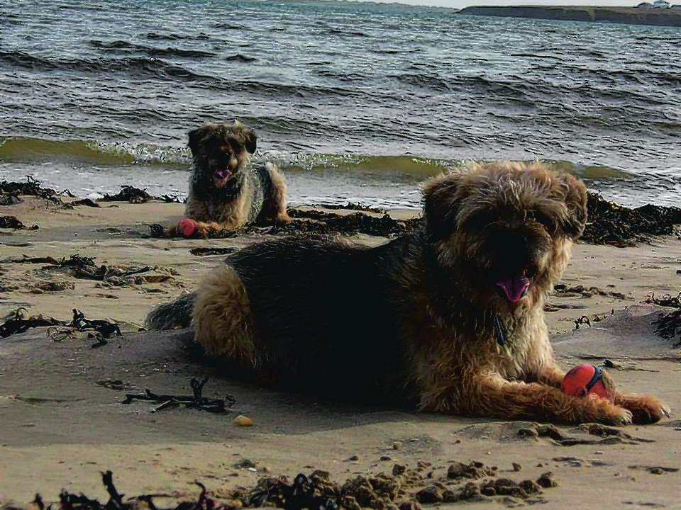 This is Vic and Jess, who live with The Fergusons on The Isle of Lewis.
